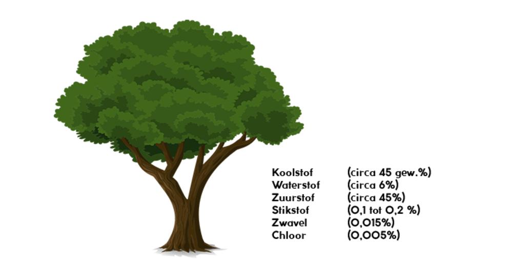 Chemische samenstelling van een boom